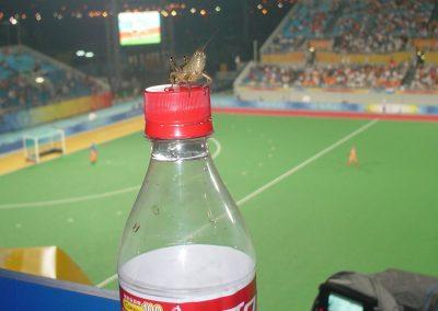 sprinkhaan in hockeystadion