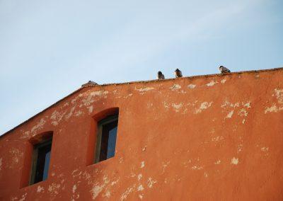 vogeltjes op elba