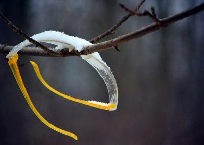 Bril aan de wilgen hangen